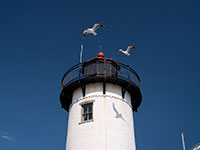eastern point lighthouse seagulls cape ann ma