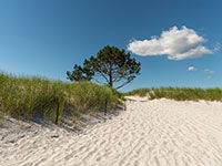 Sand Dunes Cape Ann MA Near Rockport Inn & Suites